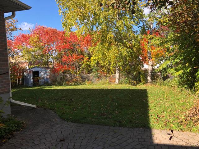 81 College-Lower, Backyard