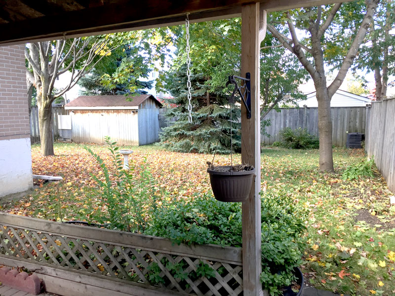 260 Cook Street - Upper, Backyard